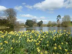 RMVC – Daffodil Sunday – Newnham Paddox, Monks Kirby – Sunday 7th April